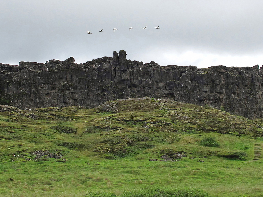 Geese flying over the Loegberg, Thingvellir, Iceland