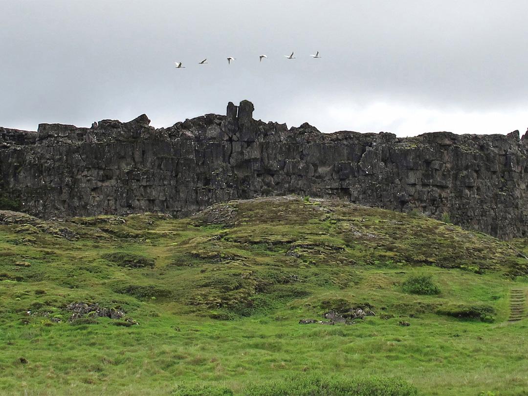 Geese flying over the Loegberg, Thingvellir, Iceland